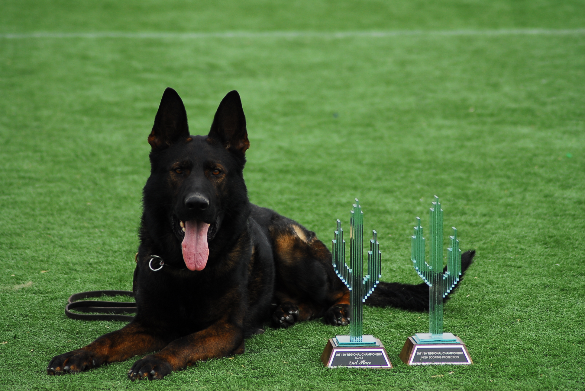 Protection Training For Dogs In California