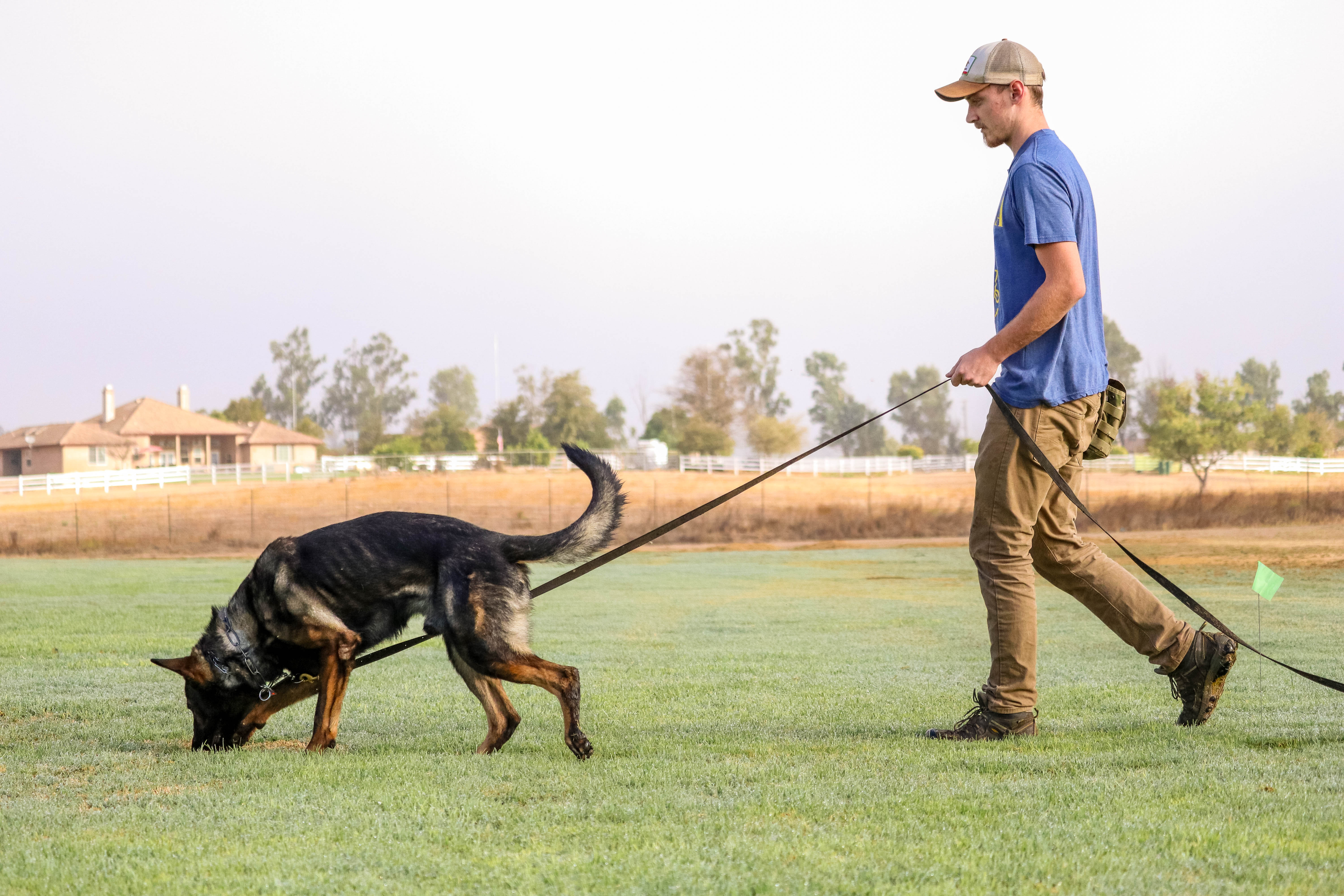 Employees - Taylor Made Working Dogs
