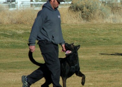 Taylor Made Working Dogs   619-726-4813